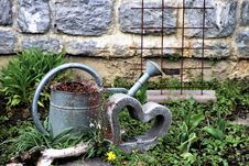 Free Plant, Water, Grass, Garden Royalty Free Stock Photography - 114713247
