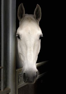 Free Horse, Horse Like Mammal, Mane, Nose Stock Images - 114713294