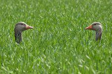 Free Bird, Fauna, Beak, Ecosystem Royalty Free Stock Photos - 114713308