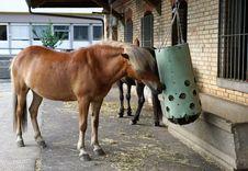 Free Horse, Horse Like Mammal, Mare, Horse Supplies Stock Photos - 114713563