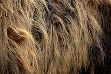 Free Fur, Fur Clothing, Close Up, Mane Royalty Free Stock Images - 114713729