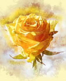 Free Flower, Yellow, Rose Family, Rose Stock Photos - 114713913