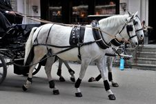 Free Horse Harness, Horse, Horse And Buggy, Carriage Royalty Free Stock Image - 114713916