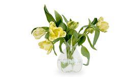 Free Flower, Yellow, Plant, Flowering Plant Stock Image - 114714201