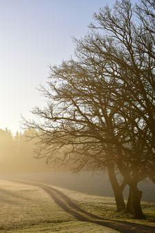 Free Tree, Winter, Sky, Branch Royalty Free Stock Image - 114714286