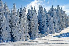 Free Winter, Tree, Snow, Woody Plant Royalty Free Stock Photos - 114714338