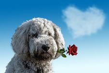 Free Dog Like Mammal, Dog Breed, Dog, Sky Stock Photography - 114714532