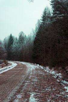 Free Green Leafed Trees Next To A Road Stock Images - 114750984