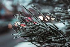 Free Macro Photography Of Needle Leafed Plant With Snowflakes Royalty Free Stock Photography - 114750987