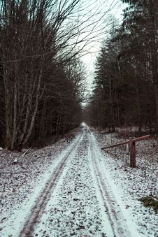 Free Road Between Bare Trees Under White Sky Stock Photo - 114750990