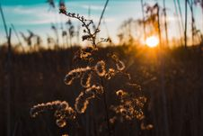 Free Silhouette Of Plant During Golden Hour Stock Photo - 114751070