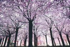 Free Spring Trees Stock Image - 114751181
