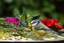 Free Bird, Fauna, Beak, Old World Flycatcher Royalty Free Stock Image - 114789956
