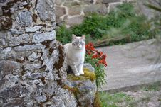 Free Cat, Fauna, Small To Medium Sized Cats, Cat Like Mammal Royalty Free Stock Image - 114790166