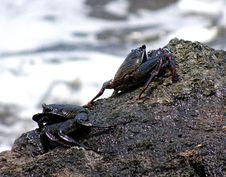 Free Amphibian, Decapoda, Animal Source Foods, Crab Stock Photography - 114790272