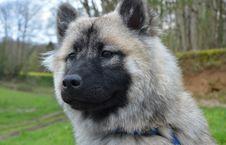 Free Dog, Dog Like Mammal, Dog Breed, Mammal Royalty Free Stock Images - 114790429