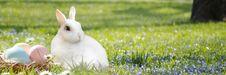 Free Mammal, Grass, Rabbit, Rabits And Hares Stock Photography - 114790502