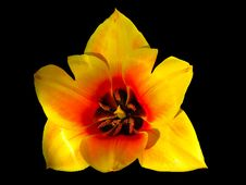 Free Flower, Yellow, Flowering Plant, Plant Royalty Free Stock Photography - 114790527