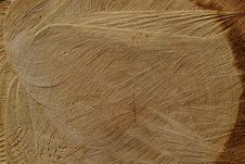 Free Wood, Texture, Wood Stain, Grass Family Royalty Free Stock Images - 114790759