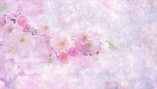 Free Flower, Blossom, Pink, Cherry Blossom Royalty Free Stock Photos - 114790918