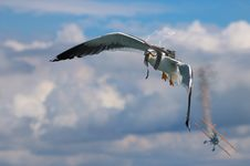 Free Bird, Sky, Flight, Beak Stock Photography - 114791362