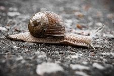 Free Snails And Slugs, Snail, Molluscs, Terrestrial Animal Royalty Free Stock Photos - 114791378