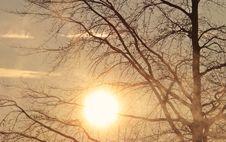 Free Sky, Branch, Tree, Sun Stock Photos - 114791553