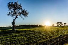 Free Solitary Tree On Field At Sunrise Royalty Free Stock Photo - 114825525