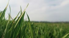 Free Shallow Focus Photography Of Green Grass Field Stock Photography - 114825542