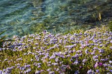 Free Photo Of Field Of Flowers Near Water Royalty Free Stock Photo - 114825635
