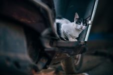 Free Selective Photography Of Bi-color Cat On Motor Scooter Royalty Free Stock Photography - 114825707