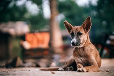 Free Selective Focus Photography Of Tan Dog Prone Lying On Ground At Daytime Stock Image - 114825731