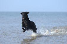Free Dog, Dog Like Mammal, Dog Breed, Wave Stock Images - 114866844