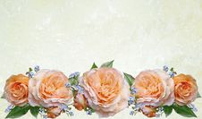 Free Flower, Rose, Rose Family, Flower Arranging Stock Photos - 114866863