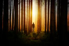 Free Forest, Light, Darkness, Tree Royalty Free Stock Photo - 114866925