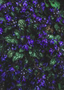 Free Purple Petaled Flowers Stock Image - 114892311