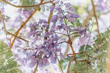 Free Selective Focus Photography Of Purple Clustered Flowers Royalty Free Stock Image - 114892346