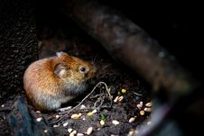 Free Selective Focus Photography Of Brown Rodent Stock Images - 114892404