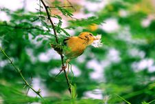 Free Yellow Bird Perched On Tree Stock Photography - 114892482