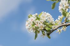 Free Close-Up Photography Apple Blossoms Stock Photos - 114892493
