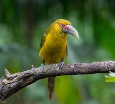 Free Selective Focus Photography Of Yellow Bird Perched On Tree Branch Stock Images - 114892504