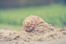 Free Macro Photography Of Shell On Sand Royalty Free Stock Photo - 114892505
