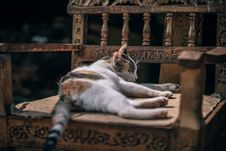 Free Photo Of Calico Cat Sleeping On Brown Wooden Armchair Royalty Free Stock Photography - 114892527