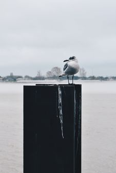 Free Gray And White Seagull On Top Of Board At Daytime Royalty Free Stock Images - 114892559