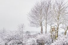 Free Trees During Winter Stock Photo - 114892560
