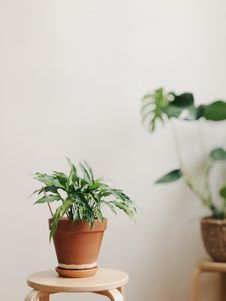 Free Selective Focus Photography Of Potted Plant Royalty Free Stock Photography - 114892577