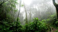 Free Rainforest During Foggy Day Royalty Free Stock Photo - 114892605