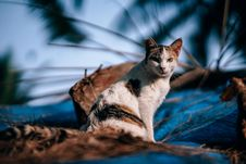 Free Calico Cat In Close Up Photography Stock Photo - 114892640