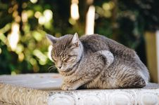 Free Gray And Black Cat Prone On Gray Concrete Surface At Daytime Stock Images - 114892664