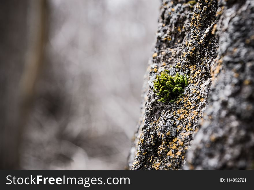 Shallow Focus of Green Leafed Plant